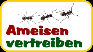 Ameisen im Sandkasten vertreiben